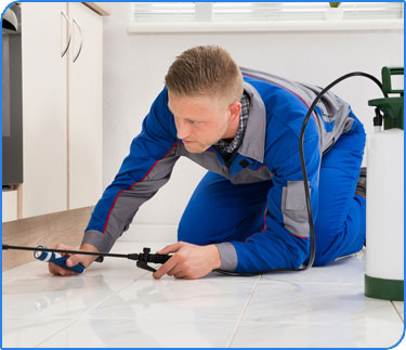 Carpet Cleaning - Gold Coast - Pest Control with Instrument